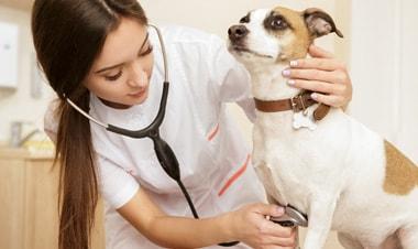 6 lý do tuyệt vời khiến bạn muốn thành bác sĩ thú y ngay lập tức