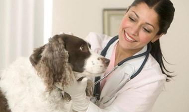 Để trở thành bác sĩ thú y cần có những kỹ năng đặc biệt nào